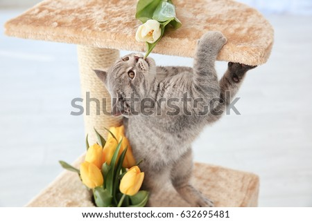 Cute cat playing on claw sharpener with bouquet of flowers #632695481