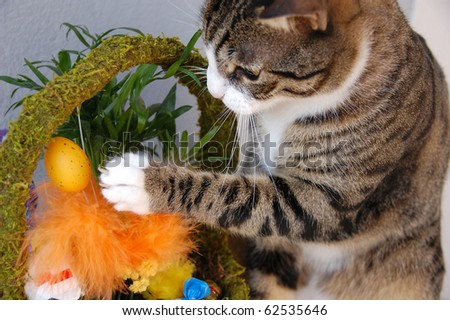 Cute cat playing with easter egg