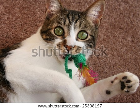 Cute cat playing with toy