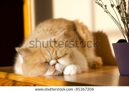 Cute cat relaxing