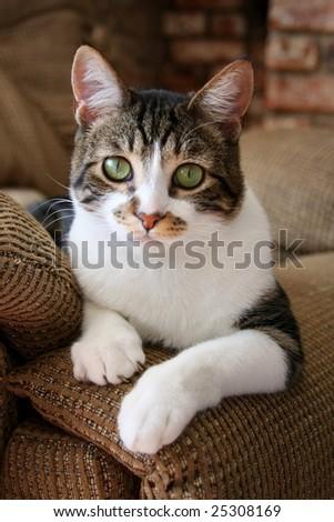 stock-photo-cute-cat-relaxing-on-sofa-25308169.jpg