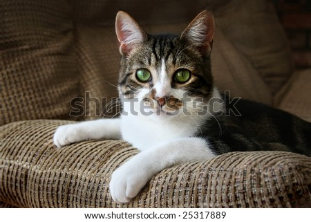 Cute cat relaxing on sofa