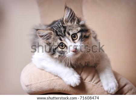 Cute cat relaxing on sofa