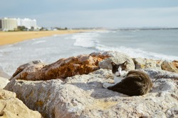 Cute cat relaxing on the marine fishing bay rocks over the sea outdoors background