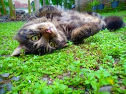 Cute cat rollong on the grass. Focus on the cat.