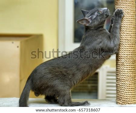 Cute Cat Scratching a Post #657318607