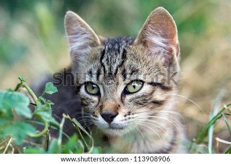 cute cat sits in the grass