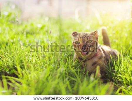 Cute cat sitting in a green grass. Best friend concept