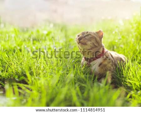 Cute cat sitting in a green grass. Best friend concept.