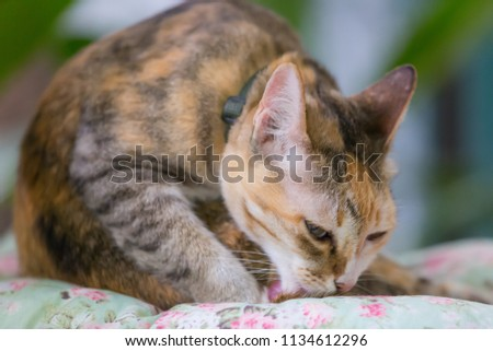 Cute cat sitting on cushion in the garden, Cute Brown Cat, selective focus #1134612296