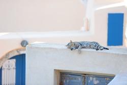 Cute cat sleeping on a Greek island Santorini