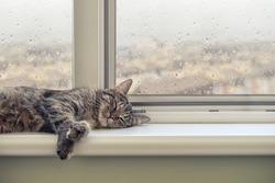 Cute cat sleeping on the windowsill in a rainy day