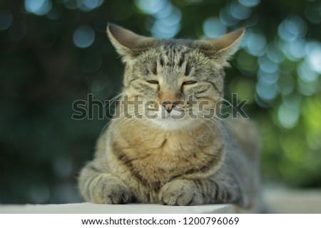cute cat smiling #1200796069
