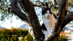 Cute cat stuck in a tree waiting for assistance