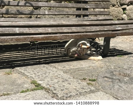 Cute cat under a bench #1410888998