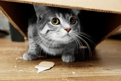 Cute cat under cardboard box
