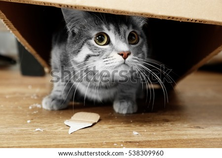 Cute cat under cardboard box #538309960