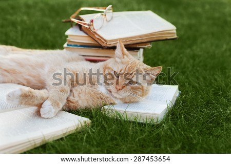 Cute cat with book and glasses lying on green lawn, funny pet