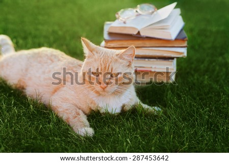 Cute cat with book and glasses lying on green meadow, funny pet