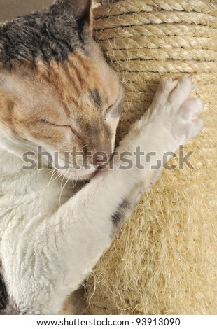 Cute Cat with Closed Eyes Scratching a Scratching Post - stock photo