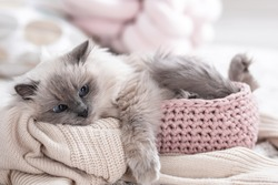 Cute cat with knitted blanket in basket at home. Warm and cozy winter
