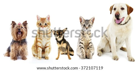 Cute cats and dogs, isolated on white #372107119