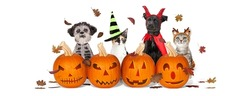 Cute cats and dogs wearing Halloween costumes sitting with carved pumpkins and falling leaves.
