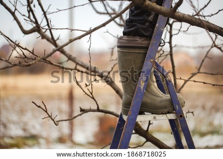 cute caucasian woman gardener pruning apple tree branches with pruning shears standing on stepladder in rubber boots, concept winter spring tree pruning and winter garden care Stockfoto ©