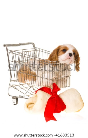 Cute Cavalier puppy in mini shopping cart with huge bone and red bow, on white background