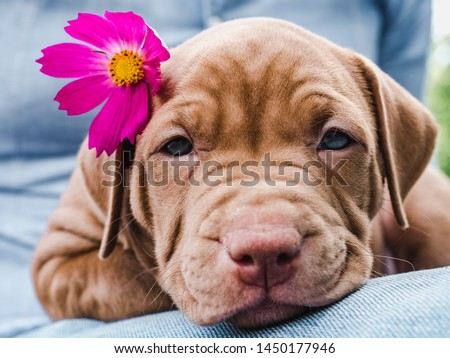 Cute, charming puppy and a bright, pink flower. Close-up. Pet Care Concept