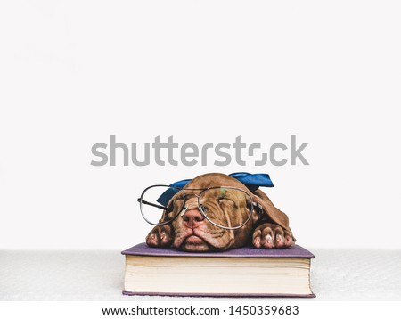 Cute, charming puppy and vintage books. Studio photo. Close-up, isolated background. Studio photo. Concept of care, education, training and raising of animals