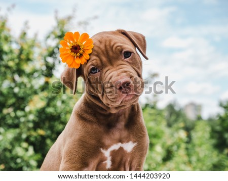 Photo of  Cute, charming puppy, sitting on a soft rug on a background of green trees, blue sky and clouds on a clear, summer day. Close-up. Pet care concept