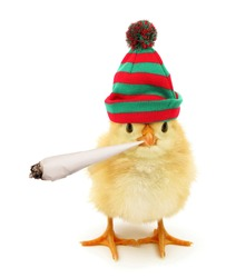 Cute chick with cannabis joint funny conceptual photo
