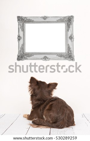 Cute chihuahua dog seen at the back lying down in a living room setting staring at a empty silver baroque picture frame for text