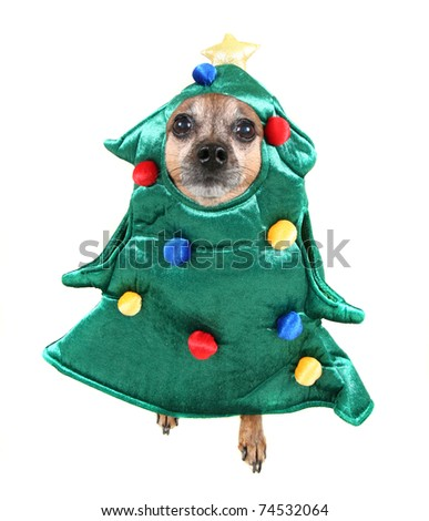 cute chihuahua dressed up in a tree costume