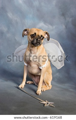 Cute Chihuahua Pug mix puppy dressed up in Halloween fairy costume.