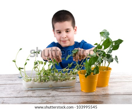 Cute child cultivating plant on cotton for school project isolated on white background