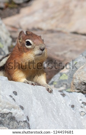 Cute chipmunk curiously looking out for food