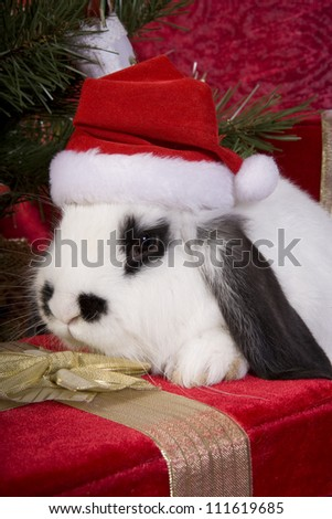 Cute Christmas bunny under the tree on gift box with red velvet background