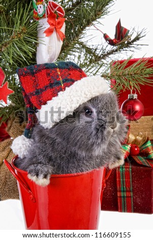 Cute Christmas grey mini lop baby bunny rabbit wearing hat under Christmas tree with gifts isolated on white background