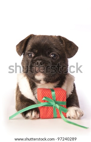 Cute Christmas puppy isolated on white