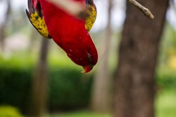 Cute, colorful parrot on branch