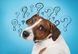 Cute confused little dog with question marks