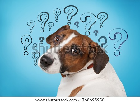 Cute confused little dog with question marks Photo stock ©