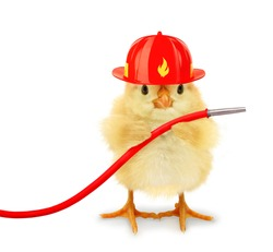 Cute cool chick fireman firefighter with helmet and fire hose funny conceptual image
