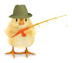 Cute cool chick fisherman with fishing rod hobby leisure activity funny conceptual image