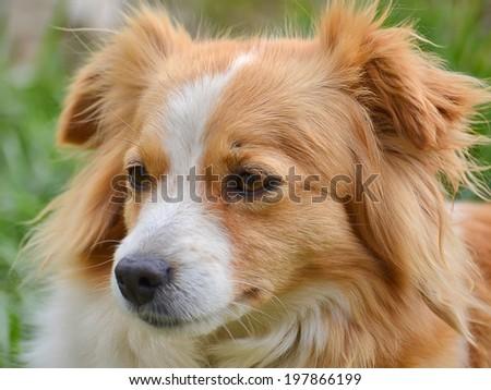 Cute cross-breed dog portrait