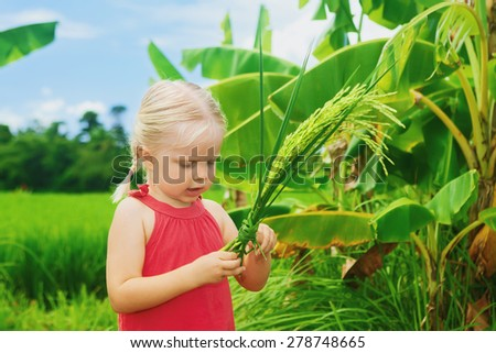 d9bf57a3fd Cute curious baby exploring the nature - examining bundle of ripe organic  rice on a green