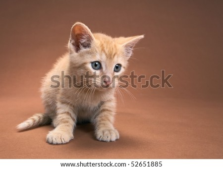 Cute curious kitten with copyspace