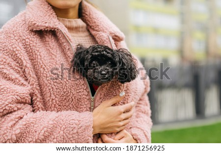Cute curly puppy breed toy poodle sits under a pink coat in a girl and warms up. Owner warms the dog with its warmth. Funny photo of toy poodle in girl on hands. Foto stock ©